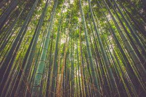 Le takesumi : l'atout bien-être qui nous vient du Japon